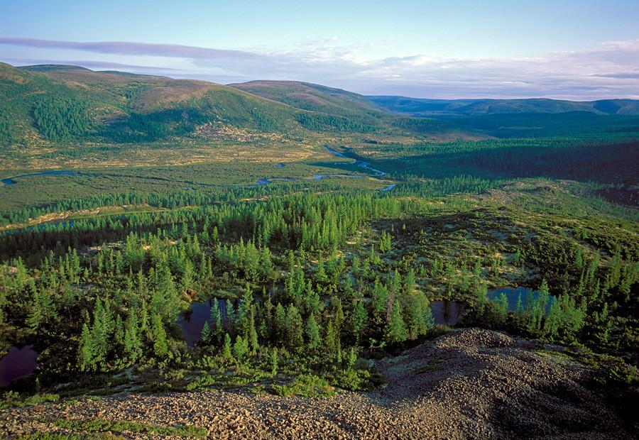 西伯利亚针叶林。图片来源:Igor Shpilenok