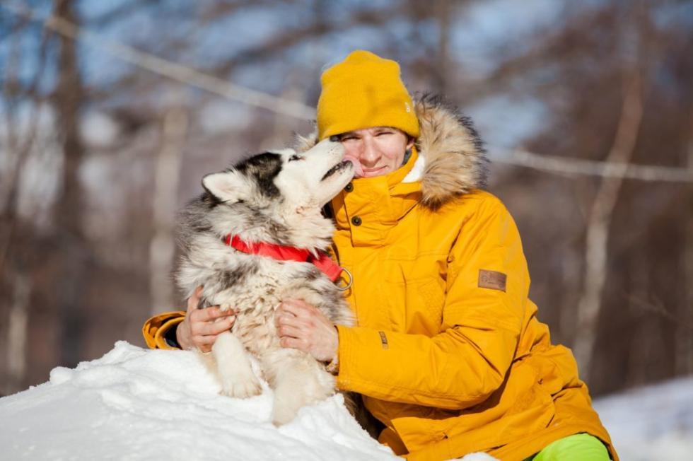 阿列克谢·特卡琴科与西伯利亚雪橇犬, 来源:sovsakh.ru
