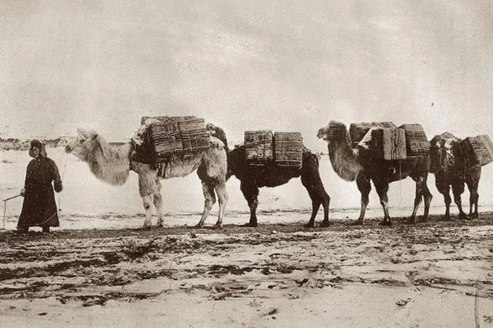 往俄罗斯运茶的商队。19世纪末。