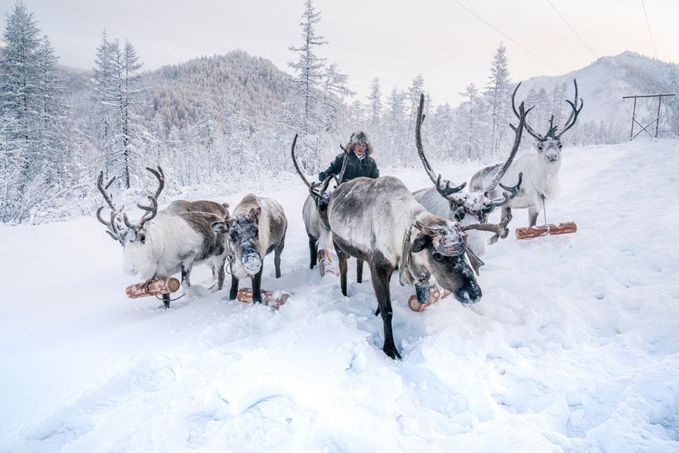 """项目参与者每年最寒冷的时间1月底的""""洗礼严寒""""期间,前往冷空气聚集的低地。这全凭侥幸,因为可以选择不同的气象百叶箱和测量地点,然后骑驯鹿或雪地摩托车到达那里。 来源:Natalia Belyakova"""