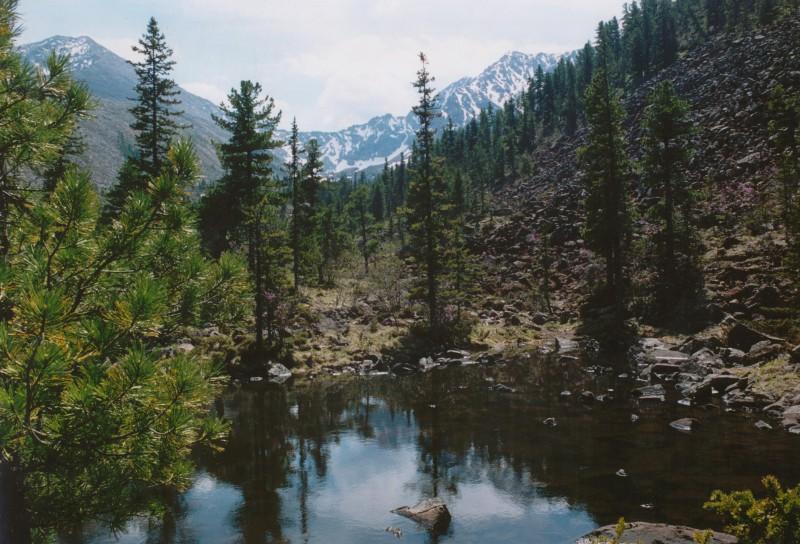 舒申斯科耶针叶林国家公园戈尔内林区。