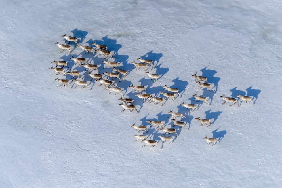Sergey Gorshkov, Wildlife Photographer of the Year/Courtesy of ROSPHOTO