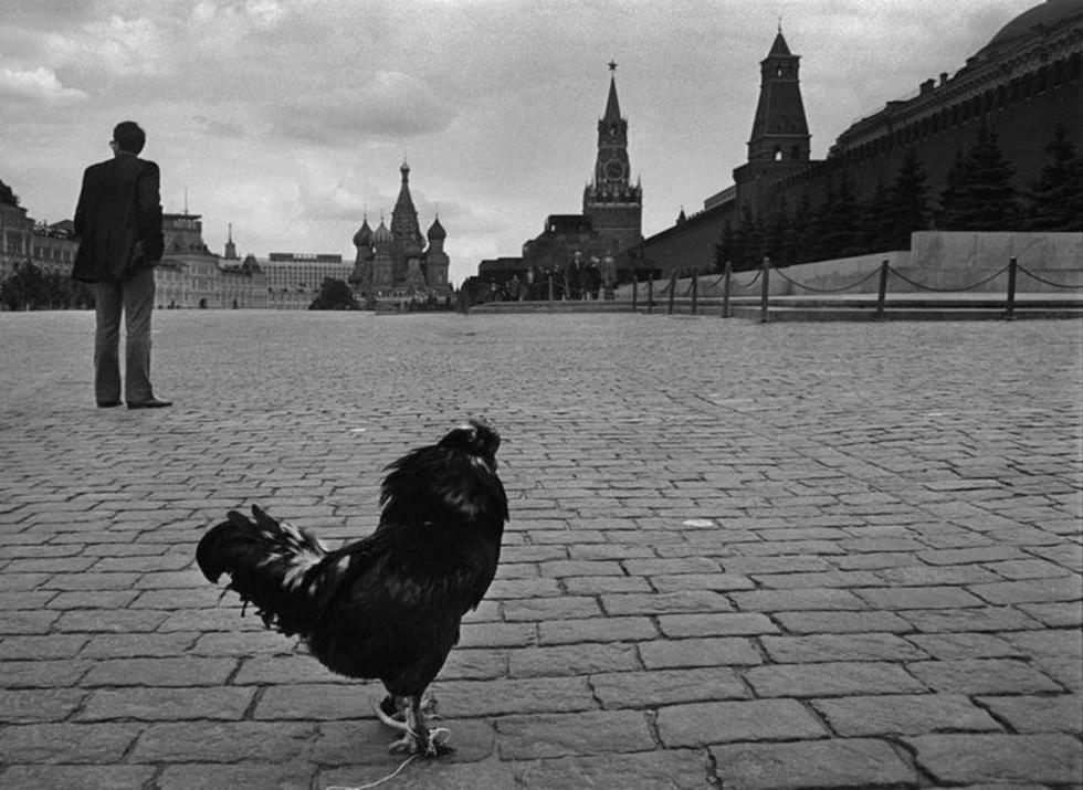 Vladimir Bogdanov / 莫斯科多媒体艺术博物馆